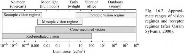 Light receptors of the human eye